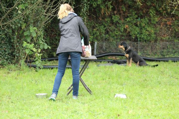 Paco wartet brav auf etwas Tolles von der Hundebar