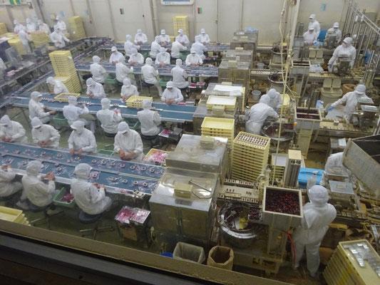 信玄餅の工場