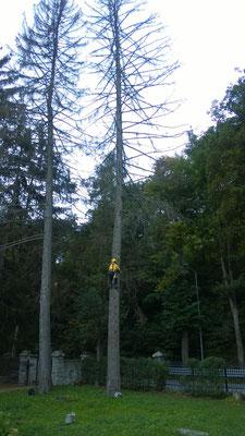 Tree climbing ed esbosco - Piemonte -Provincia di Cuneo