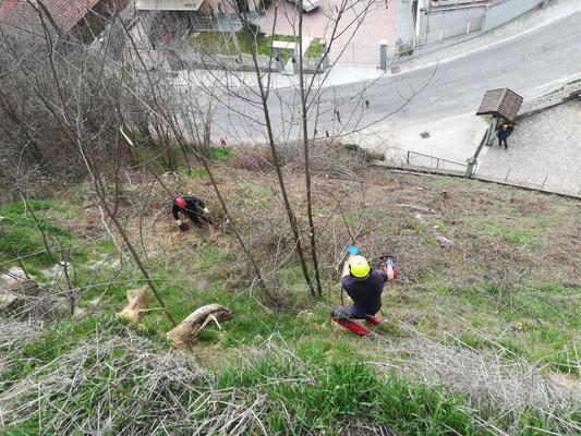 Esecuzione di disbosco e scoticamento in centro abitato - Piemonte - Provincia di Cuneo