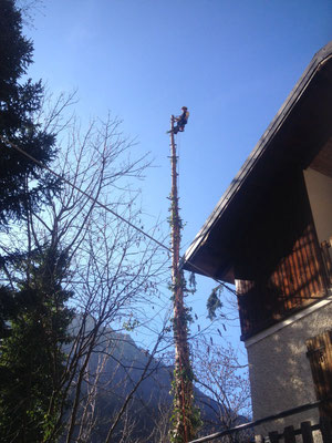 Tree climbing ed esbosco - Piemonte CN