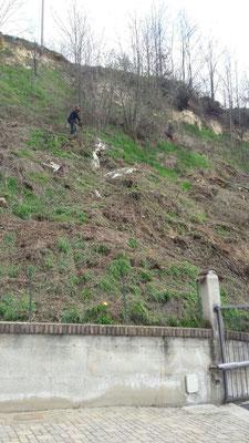 Esecuzione di disbosco e scoticamento in centro abitato - Piemonte - CN