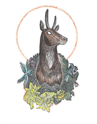 """Trophy II, Antelope, 10""""h x 8""""w. Hand Colored Edition of 10."""