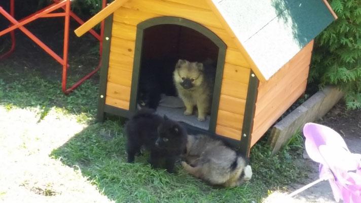 zuhause in unserem Welpengarten hat es ein neues Hundehaus gegeben.