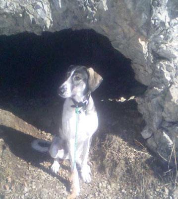Chilli bei meiner Grotte - Dürnberg
