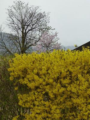 Endlich Übergang zum Frühling