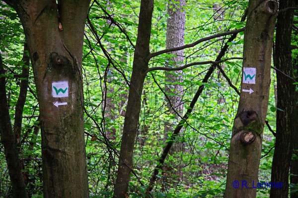 """""""verwirrende Wegeführung"""" im Wald bei Kescheid"""