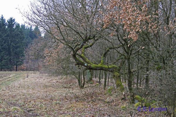 """""""Wegweiser"""" Baum"""