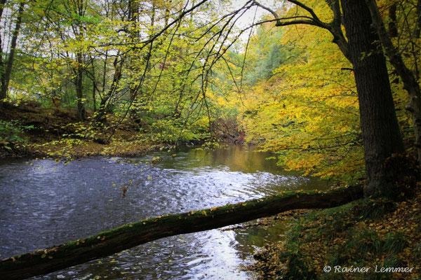 Wied im Herbst (gleiches Bild Wied wie vorheriges Wied  im Frühjahr)