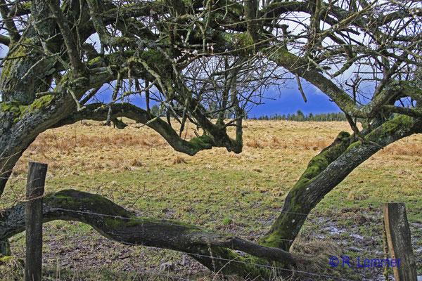 Vom Winde geformt in der Nähe vom Gräbersberg