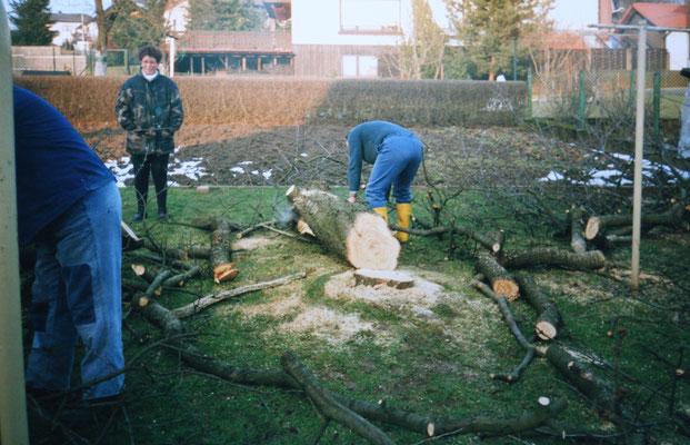 Kirschbaum Fällung
