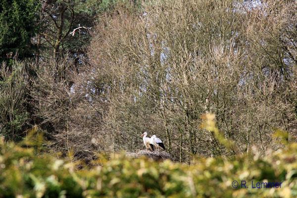 Storchenpaar im Vogelpark Uckersdorf