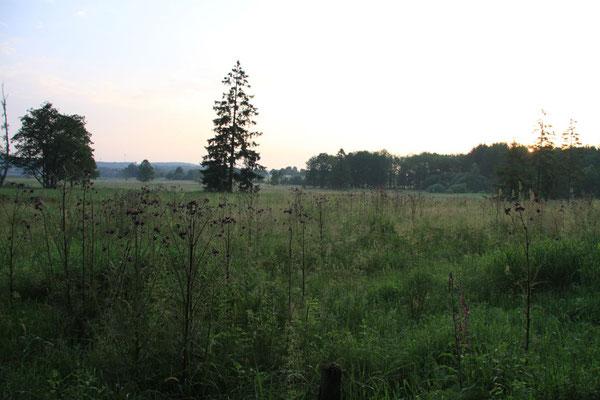 Morgens früh um 06.30 am Dreifelder Weiher