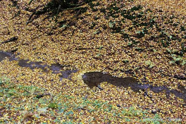 """""""Blätterbach"""" im Herbst"""