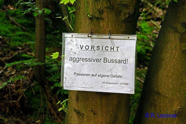 """Der """"aggressive Bussard"""" von Forstmehren"""