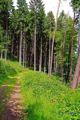 Im Wald bei Peterslahr
