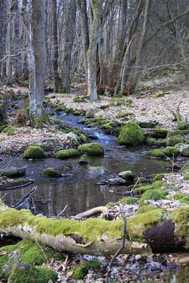 Naturschutzgebiet Bermershube