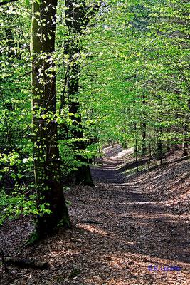 Im Wald bei Marienthal