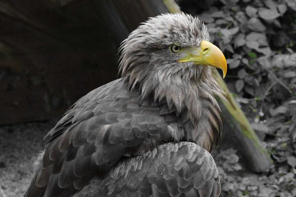 Beatrice Herrmann Fotografie - Tierfotografie