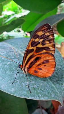 Beatrice Herrmann Fotografie - Schmetterling
