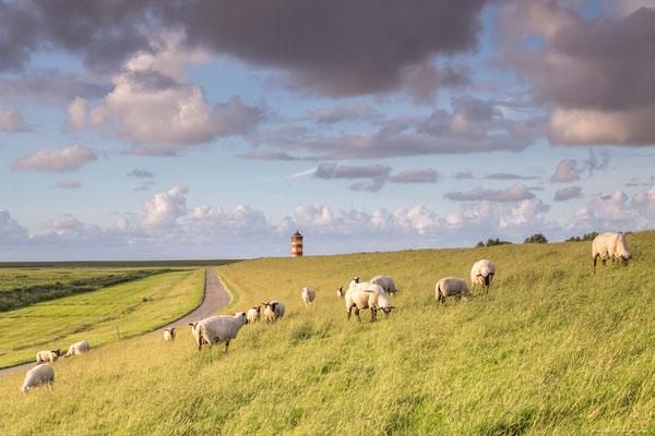 Schafe auf dem Deich am Pilsumer Leuchtturm, Krummhörn