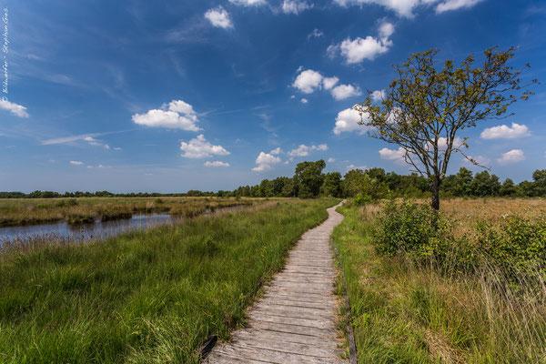 Naturschutzgebiet Ewiges Meer in Ostfriesland im Sommer