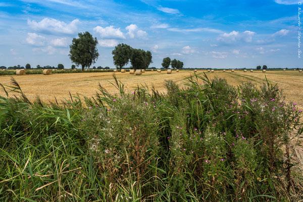 Ostfriesische Landschaft in der Nähe von Emden