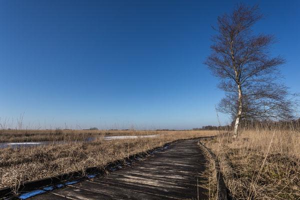 Winter im Naturschutzgebiet Ewiges Meer in Ostfriesland
