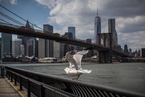 Blick auf die Brooklyn Bridge und Skyline von Manhattan