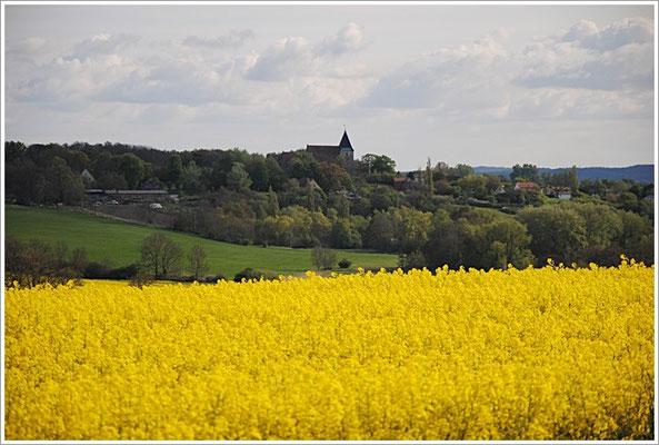 Rapsfeld- Bobbin Rügen
