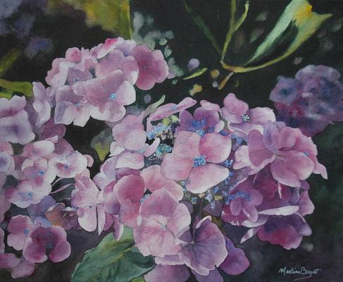 Hortensias - 50x61 cm  -  350€