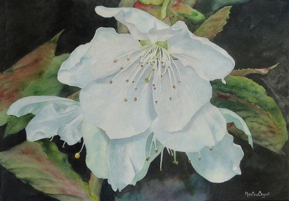 Fleurs de Pommier - 50x70 cm   -  300€
