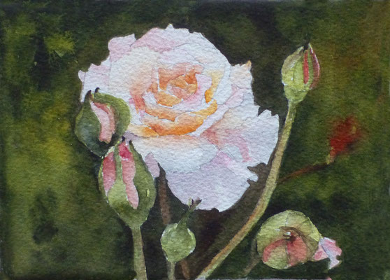 Roses blanches - 13x 18 cm  -  25€