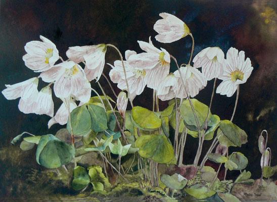 Fleurs de coucou - 50x70 cm  -  350€