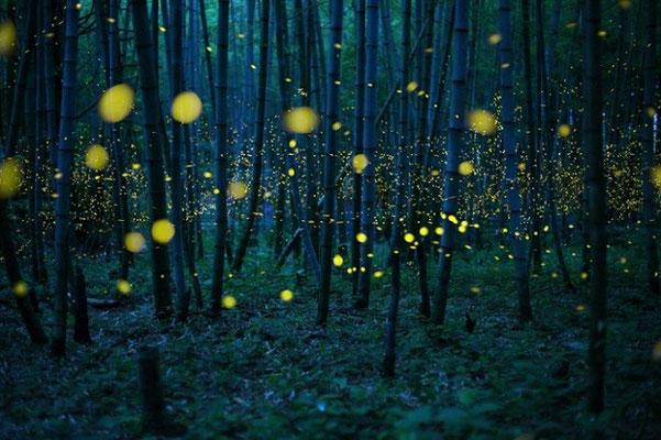 6. Бамбуковые огни