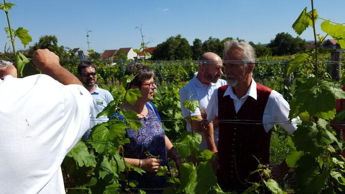Als Abschluss unserer Reise geht's im Weingarten....