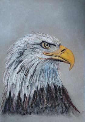 15 Profil d'aigle - pastel 30x21