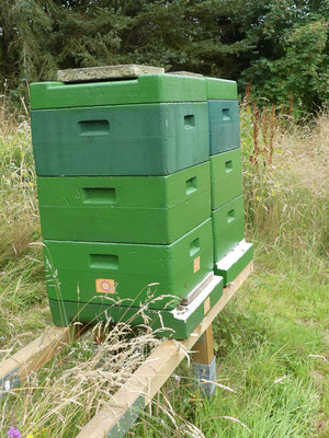 Oberste Zarge zur Varroa-Bekämpfung