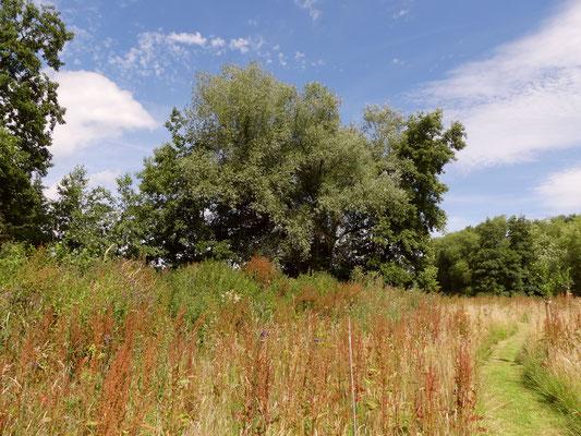 Der große Totholzhaufen ist auf der Ostseite vor lauter Grün kaum noch zu erkennen.