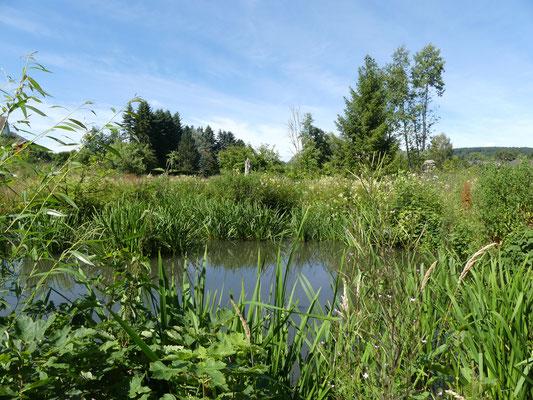 Am unteren Teich