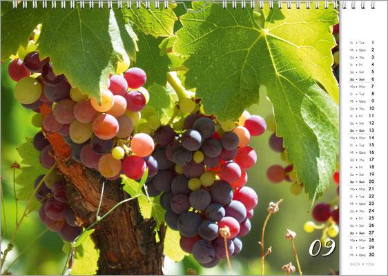 """Weinkalender, Musikkalender, Musikgeschenke und Geschenke für Musiker ... """"Bach 4 You""""-Geschenke."""