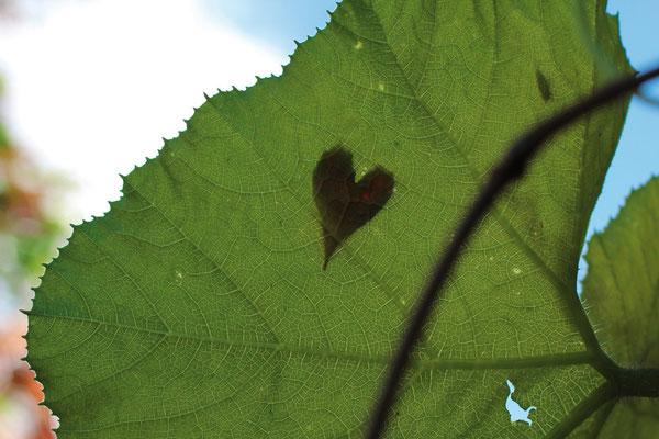Herz-Blatt-Schatten - Mirjam