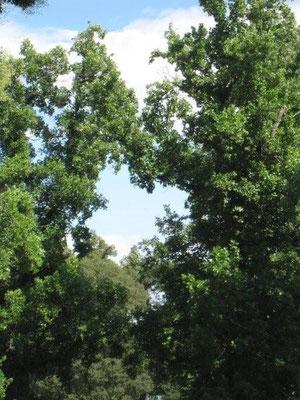 Wolken-Baum-Herz - Barbara