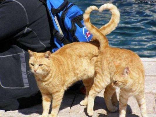 Katzen mit Herz - HC