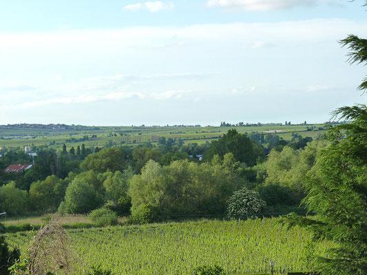 Blick über die Weinberge