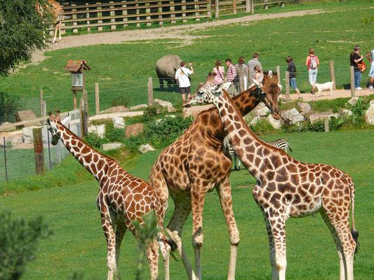 HERMIVAL LES VAUX- Zoo du Cerza - 61 km