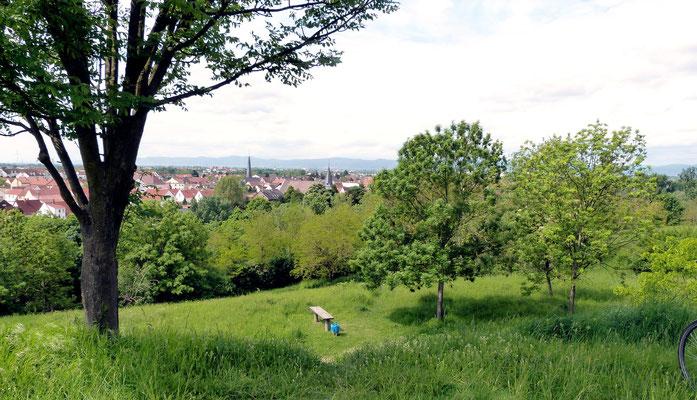 Blick vom Michaelsberg Richtung Maudach