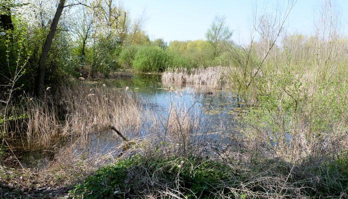 Sumpf neben dem Backsteinweiher