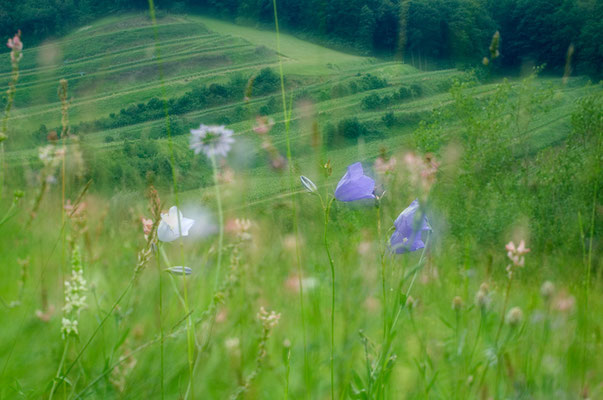 Blick vom Badberg (Kaiserstuhl) auf Weinberge [UKR20120606_0355]