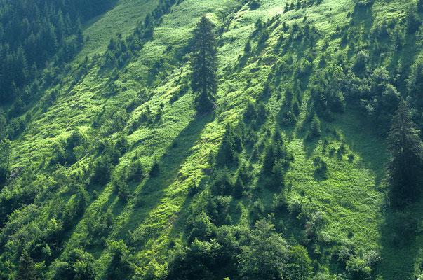 Berghang im Älpletal bei Berwang [UKR20180615_0452]